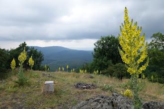 Photo: Kytky na vrcholku Klokoč (661 m)