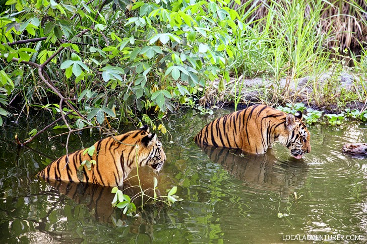 Bali Safari and Marine Park (Best Things to Do in Bali Indonesia).
