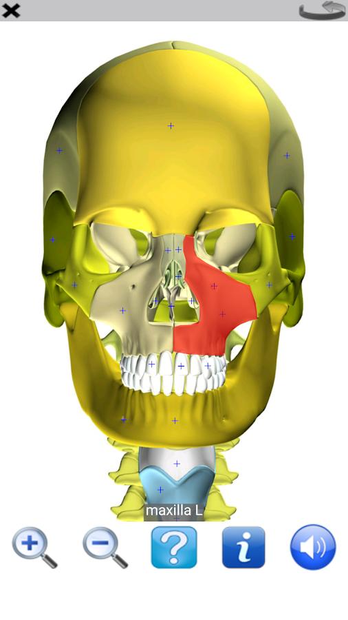 Visual Anatomy Free- screenshot