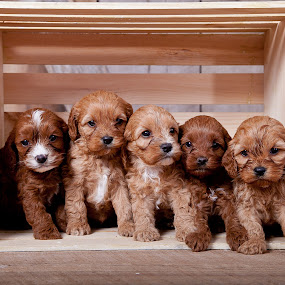 Ready for shipping by Melanie Ayers Wells-Photography - Animals - Dogs Portraits ( animals, puppies, dogs, pets, melanie wells photography, crate )