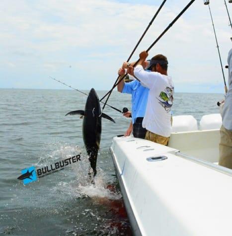 Yellowfin Tuna Coming In The Boat