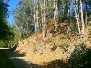 Photo: Plenty of native trees to liberate here.