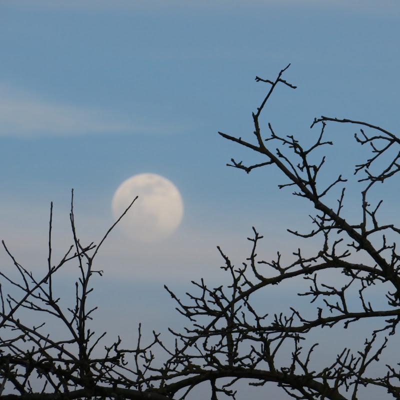 luna di giorno di klarinetto