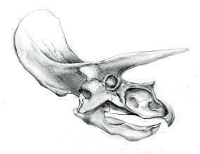 Photo: Triceratops skull, Graphite