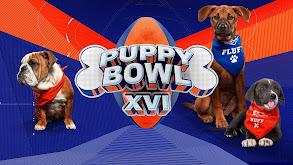 Puppy Bowl XVI thumbnail