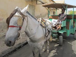 Photo: Sn1P0407-160204Ousmane, cocher, sa calèche, 'Jean-Michel' le cheval, StLouis, pointe nord IMG_0361