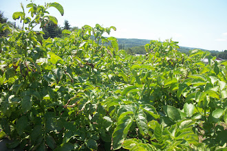 Photo: Beauty view of distant hills over tomatoes