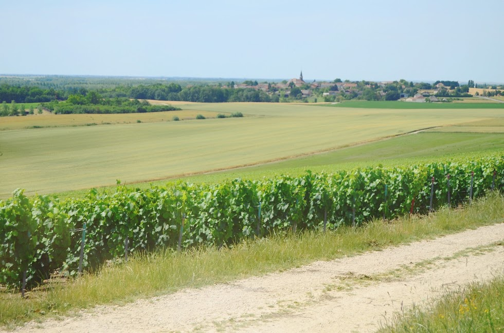 Vineyard view on the village of Changy in the Champagne-Ardenne | via It's Travel O'Clock