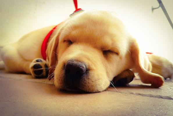 Il mio piccolo cane – un battito di cuore ai miei piedi. di Giannigiansanti