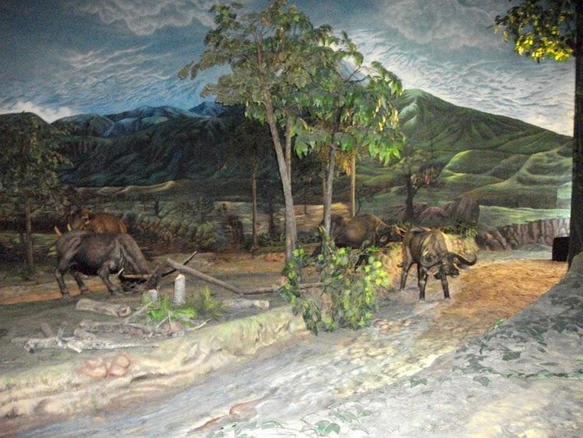 Kerbau purba adalah hewan yang banyak berkeliaran saat itu