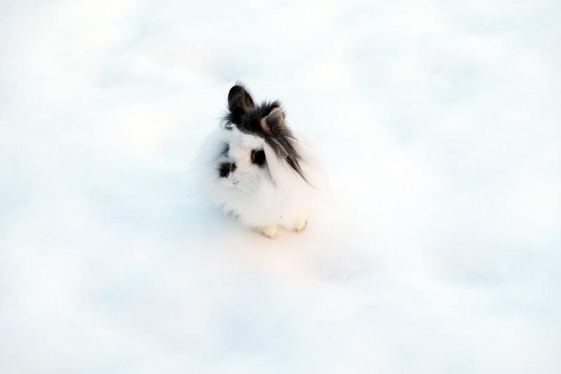 Bianca nella neve di clic