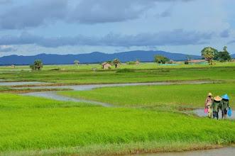 Photo: De groene rijstvelden van Myanmar