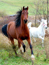 Photo: Two of my beautiful horses, Lyric and Isis.
