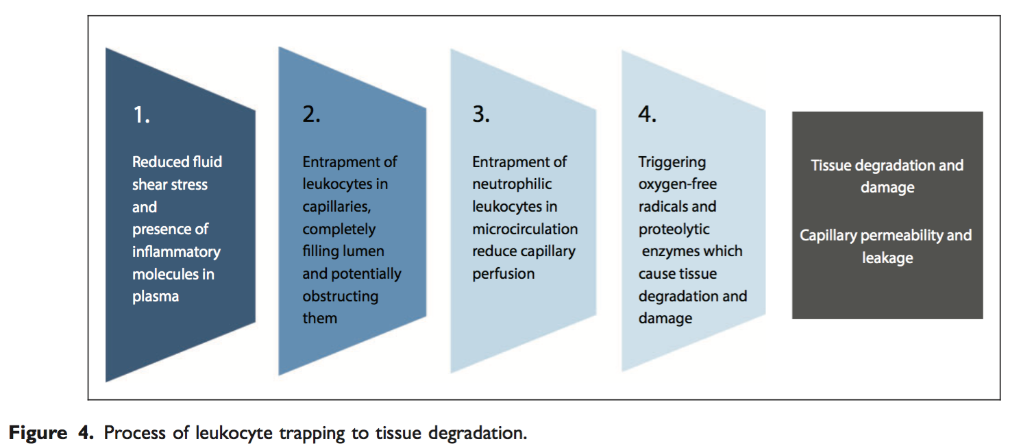 Process of leukocyte trapping to tissue degradation