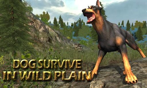 Dog Survive In Wild Plain