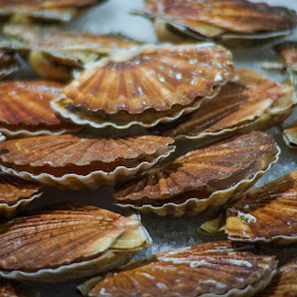 Scallops by Yordan Mihov - Food & Drink Ingredients ( ingredients, scallops, market, seafood, sony alpha )