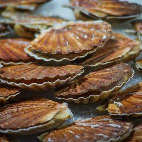 Scallops by Yordan Mihov - Food & Drink Ingredients ( ingredients, scallops, market, seafood, sony alpha )