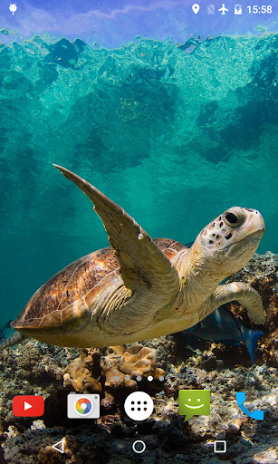 Underwater Sea Turtle 3D LWP