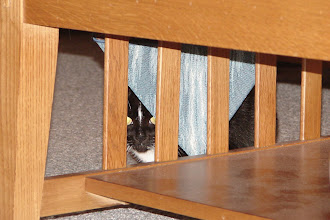 Photo: Day 92 ... Mariner (hiding as usual)