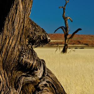 african landscape-73.jpg