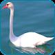Swan Wallpaper Download on Windows