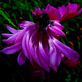by Fred Starkey - Flowers Single Flower (  )
