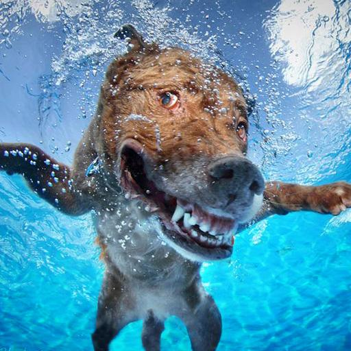Dog Swimming Pool Race : Crazy animals water game