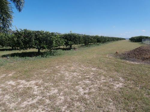 74ha Lime tree farm west of Dimbulah