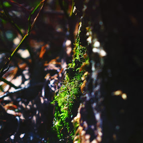 Up and coming by Juliusz Wilczynski - Nature Up Close Other Natural Objects