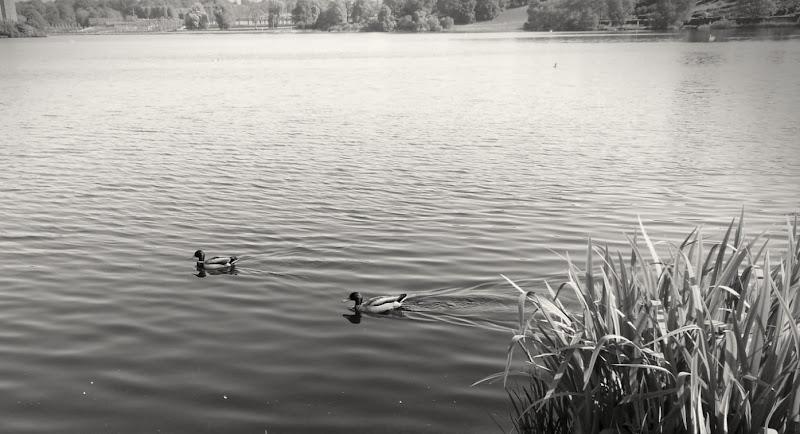 La calma del lago di fedem