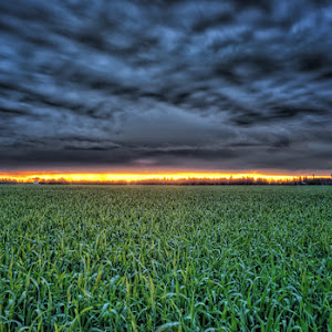 sunset-field-2.jpg