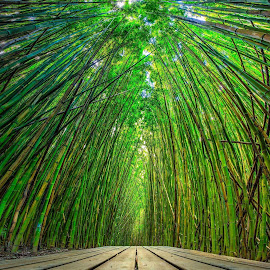 Bamboo Forest by Joel Jones - Landscapes Forests ( bamboo, forest, hawaii, hiking, maui )