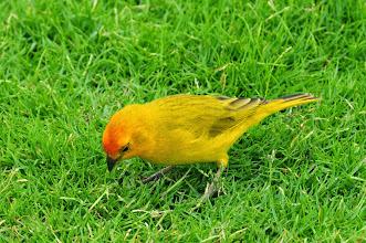 Photo: A yellow bird.