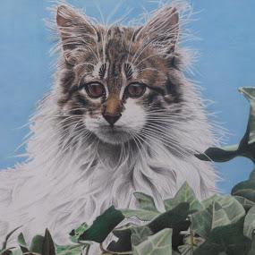 GATO by Kile Zabala - Drawing All Drawing ( argentina, cats, pencil, draw, animals, la plata, art, pencil color, buenos aires, paint, dibujo, gatos )
