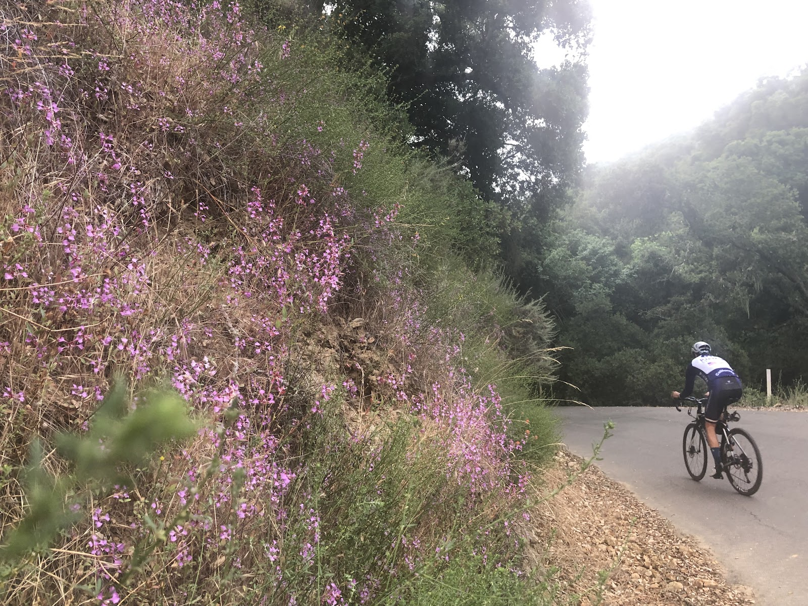 Climbing Welch Creek Road by bike - start of climb