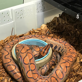 by Denise Armstrong - Animals Reptiles
