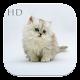 Cute Cat HD Wallpaper (app)