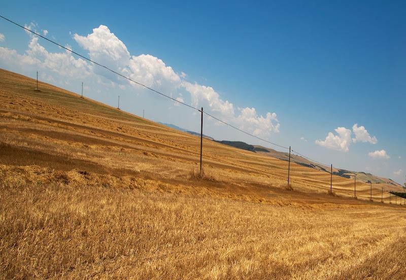 Il grano e' maturo di PaolaPlinia