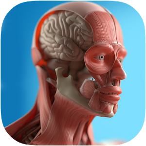 Anatomy Game Anatomicus Pro - Android Apps on Google Play