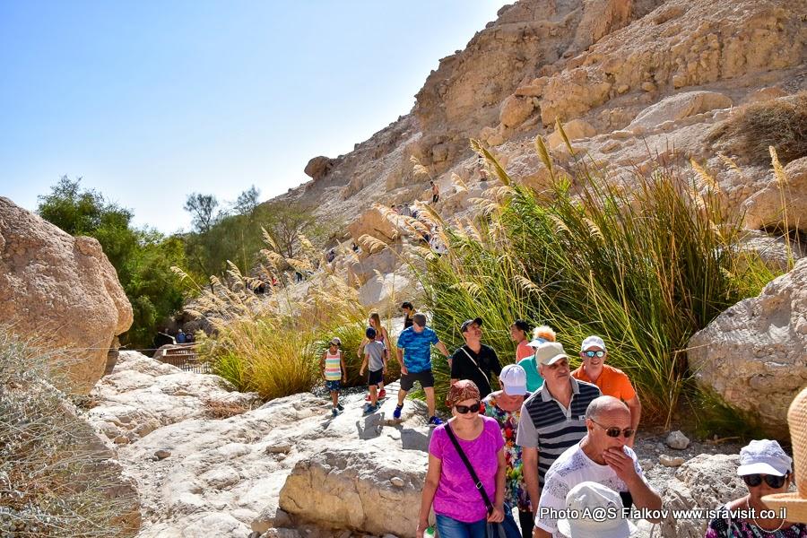 Поход по ручью Давида на экскурсии в заповеднике Эйн-Геди в Израиле.