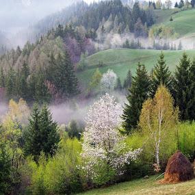 spring in Transylvania by Dan Baciu - Landscapes Weather ( clouds, hill, hills, green, romania, haystack, blosom, spring, field, foggy, hay, weather, springtime, transylvania, rain, bran,  )
