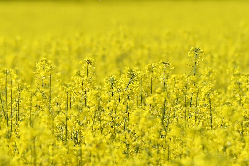 giallo esplosivo di silvia_brutti