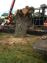Photo: A closer look at what remains of the tree
