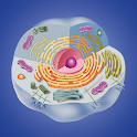 Cell biology icon