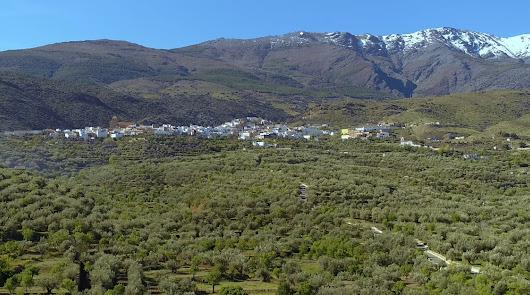 Cultivos de olivos y almendro, límite a los invernaderos y casetas blancas