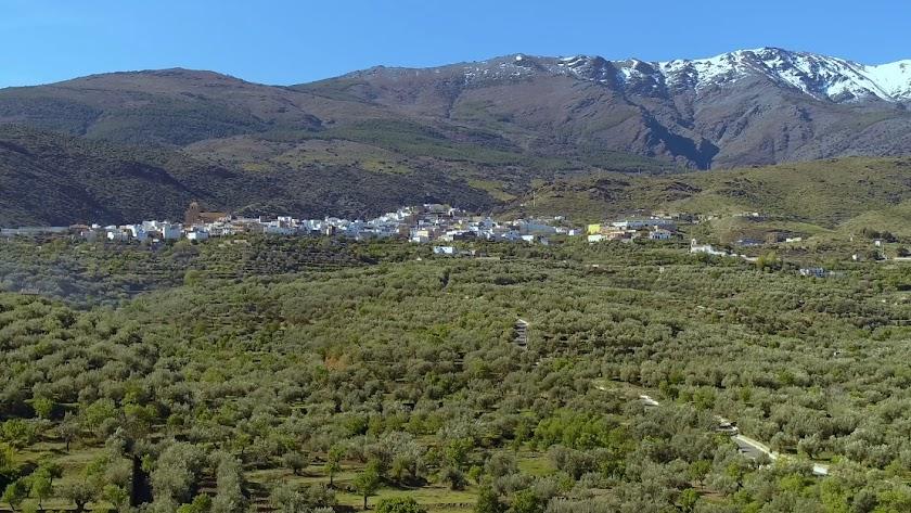 Vista panorámica, con olivares en primer plano y la sierra, al fondo, en una imagen de 'Turinfo Abrucena'.