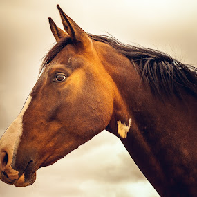 Horse Portrait Dark Sky by Vicki Roebuck - Animals Horses ( horse portrait, horse, dark sky, portrait )