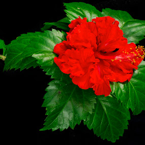 Green and red by Hasan Basri - Nature Up Close Flowers - 2011-2013