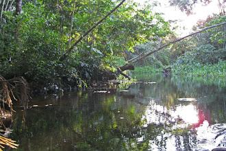 Photo: In the Amazon
