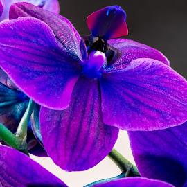 Orchid by Bert Templeton - Flowers Flower Arangements ( green, blue, plant, purple, orchid, flower )